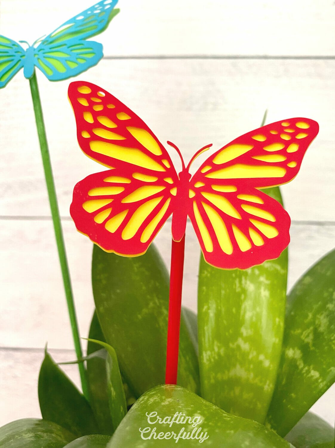 Colorful and bright butterfly plant stake is in a snake plant.